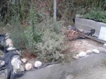 Sección de la depuradora con plantas macrofitas que va a parar al estanque.