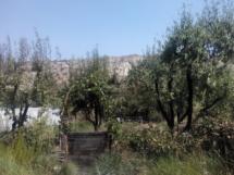 Frutales en una de las terrazas de Sunseed